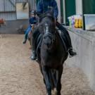 Paardrijden-01236