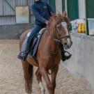 Paardrijden-01247