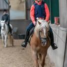 Paardrijden-01252