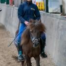 Paardrijden-01269