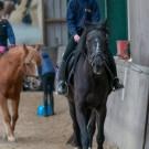 Paardrijden-01280