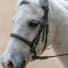 Paardrijden-01315