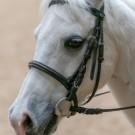 Paardrijden-01317