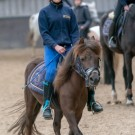 Paardrijden-01333