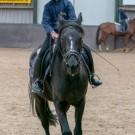 Paardrijden-01344