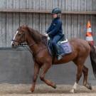 Paardrijden-01499