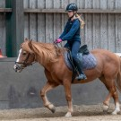 Paardrijden-01501