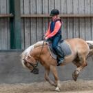 Paardrijden-01530