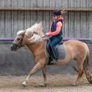 Paardrijden-01534