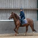 Paardrijden-01546