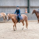 Paardrijden-01711